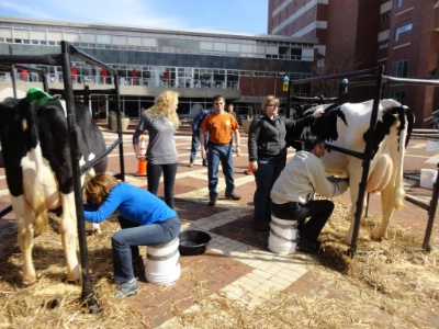 NC Milking Contest