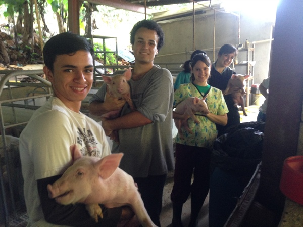 Puerto Rico Chapter Pig Farm Visit