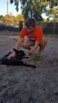 Florida Chapter Service at the Humane Society