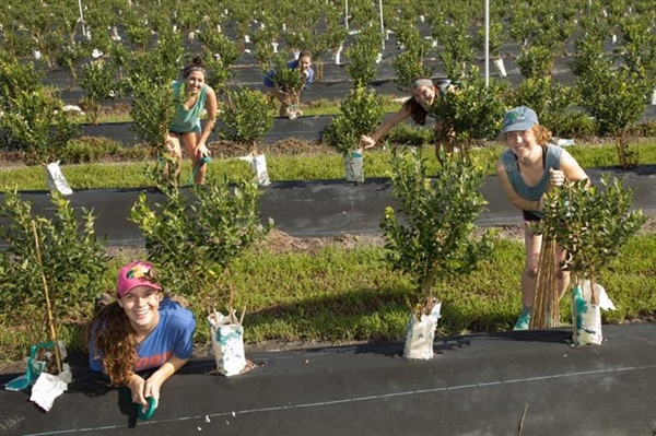 AZ Florida Chapter Helps a Blueberry Farmer