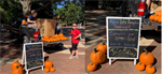 North Carolina Chapter Has a Pumpkin Sale Fundraiser October 21st, 2019