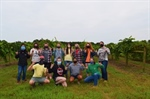 North Carolina Chapter Farm Tour to Muscadine Grape Farm