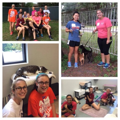 Florida Chapter: Humane Society Service Event